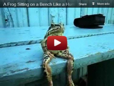 Sitting Frog Video
